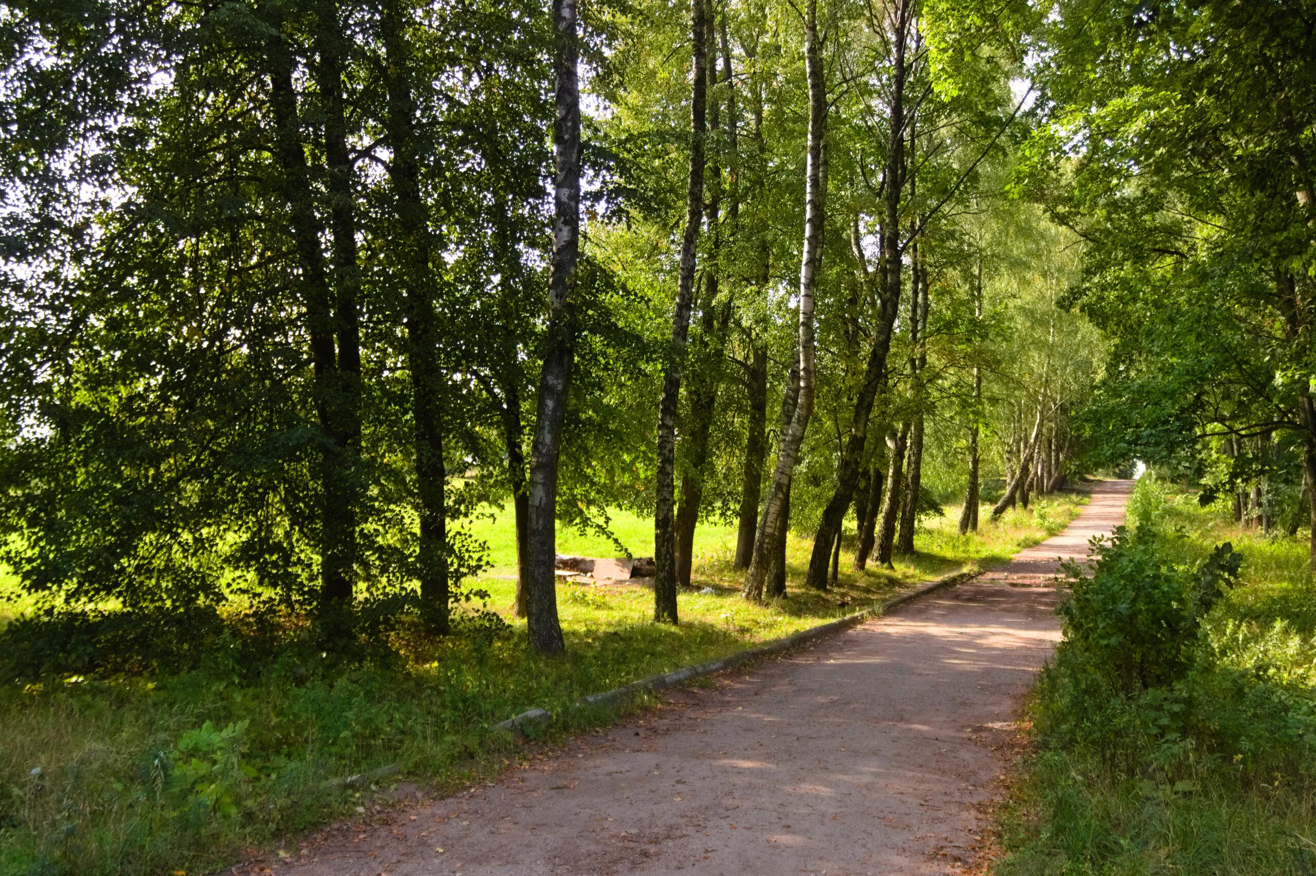 Дорога, построенная узниками концлагея Stalag 352 в Масюковщине